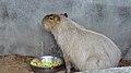 Assiniboine Park Zoo, Winnipeg (480496a) (24801747790).jpg