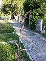 Atriplex hortensis sl7.jpg