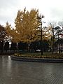 Autumn Leaves in Hiroshima Peace Memorial Park.jpg