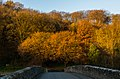 Autumn colours on Whitcliffe (geograph 5618549).jpg