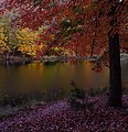 Autumn tree lake - West Virginia - ForestWander.jpg