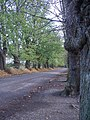 Avenue of trees - geograph.org.uk - 76140.jpg