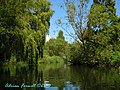 Avon near Christchurch - Willows and Ripples - panoramio.jpg