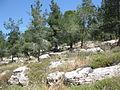 Avshalom's Cave IMG 0979.JPG