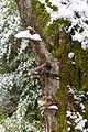 Bäume Schauinsland (Freiburg) jm22309.jpg