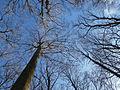 Bäume unter Blauem Himmel im Januar 2016 in Deutschland (4).JPG