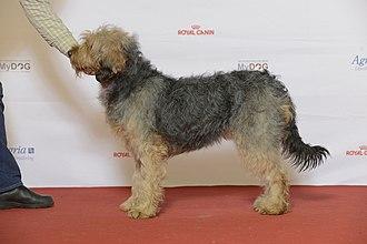 Barak hound - Barak hound