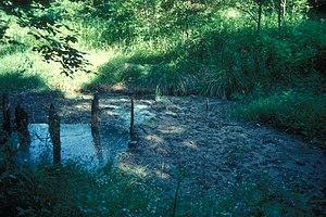 Missouri boones salt lick trail pic 807