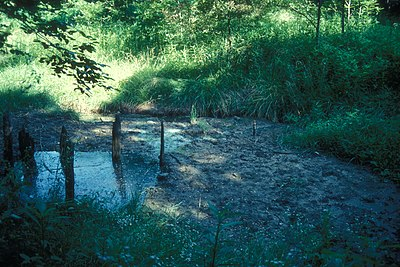 The salt spring known as Boone's Lick in Howard County, Missouri BOONSLICK STATE PARK.jpg