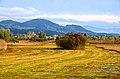 Bachtel - Robenhauser Riet 2012-10-13 16-36-47.JPG