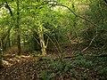 Backs Wood - geograph.org.uk - 1547522.jpg