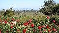 Balboa Park, San Diego, CA, USA - panoramio (110).jpg