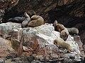 Ballestas Islands, Peru - panoramio (1).jpg
