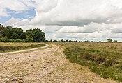Balloërveld, natuurgebied in Drenthe 01.jpg