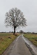 Bare tree on the side of a rural road in Bertrix, Belgium (DSCF6447).jpg