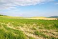 Barntrup - 2015-05-22 - LSG-3919-0031 (9).jpg