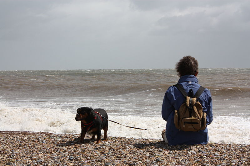 File:BeachDog.JPG