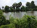 Beautiful Bengal Nature.jpg
