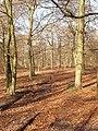 Beech Wood near Little Marlow - geograph.org.uk - 117555.jpg