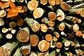 Beech logs, West Woods, near Marlborough - geograph.org.uk - 789245.jpg