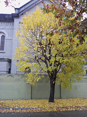 Bernal, Argentina - Maria Auxiliadora Church in autumn, Bernal, Buenos Aires Province