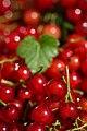 Berry Heaven (14553849611).jpg