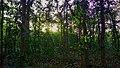 Bhawal National Park 02.jpg