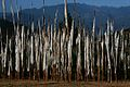 Bhutan, Prayer Flags - Flickr - babasteve.jpg