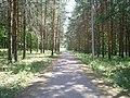 Biathlon trail in Ishimbay, Russia.jpg