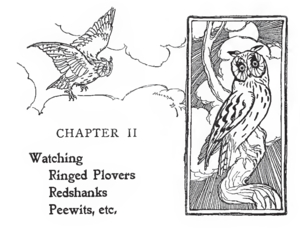 Edmund Selous - Illustration by Joseph Smit of owls in Edmund Selous's Bird Watching