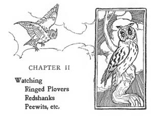 Edmund Selous - Illustration by Joseph Smit of owls in Edmund Selous's Bird Watching