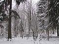 Bird feeders in the winterforest. January 2014. - Кормушки для птиц в зимнем лесу. Январь 2014. - panoramio.jpg
