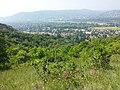 Bisamberg Westhang sl3.jpg
