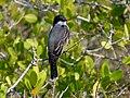 Black Point Wildlife Drive, Merritt Island FL - Flickr - Rusty Clark (75).jpg