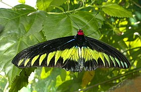 Black and yellow butterfly KL.jpg