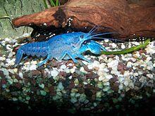 Crayfish Quiz amp Worksheet for Kids  Studycom