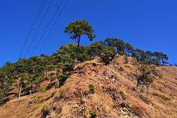 Blue sky in the hills of Uttarakhand.jpg