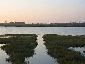 The wetlands estuary at Bolsa Chica Ecological...