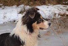 Natural Dog Epilepsy Treatment