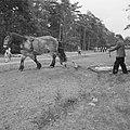 Bosbewerking, arbeiders, dieren, boomstammen, vervoeren, paarden, Bestanddeelnr 251-9536.jpg