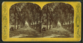 Boston Common, from Robert N. Dennis collection of stereoscopic views 6.png