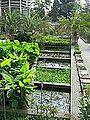 Bot. Garten Padua Teiche.jpg