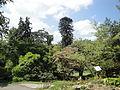 Botanischer Garten Bern DSC03954.jpg