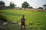 Boy by Kalabougou field (6392188).jpg