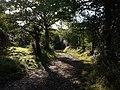 Bridleway near Medland - geograph.org.uk - 576251.jpg