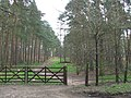 Bridleway through Forest, Enville, Staffordshire - geograph.org.uk - 394577.jpg