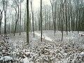 Brohmer-Berge-Buchennaturverjuengung-bei-Jatznick-08-01-2010-05.jpg