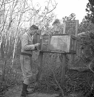 Rossitten Bird Observatory - Bird catching and ringing at Rossitten in 1939