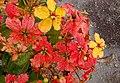 Bunga oranye.jpg