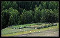 Burqin, Altay, Xinjiang, China - panoramio - neverdance (2).jpg